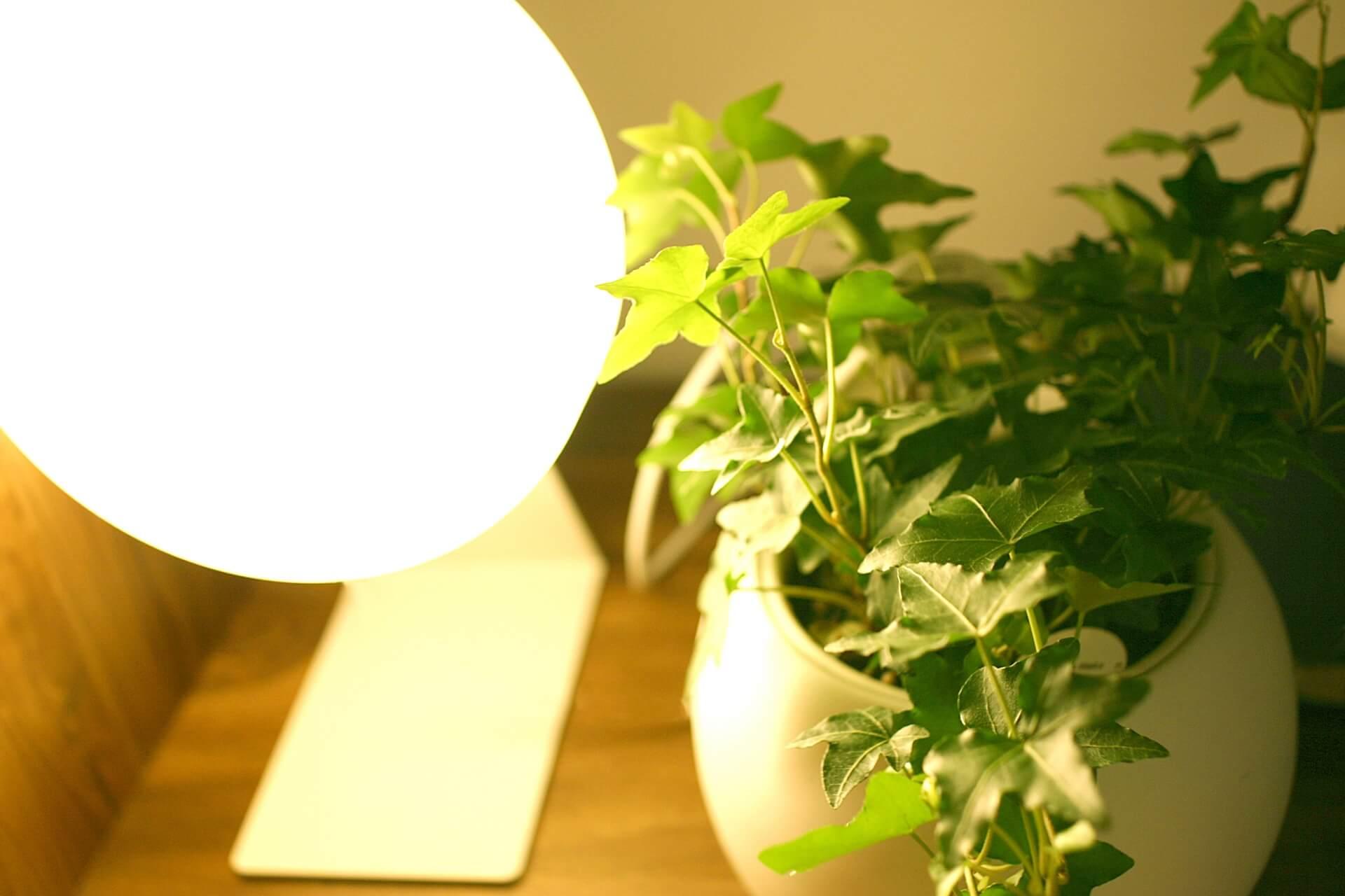 ライトと植物の画像
